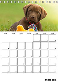 Labrador Welpe - Seelenhund (Tischkalender 2019 DIN A5 hoch) - Produktdetailbild 12