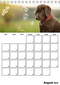 Labrador Welpe - Seelenhund (Tischkalender 2019 DIN A5 hoch) - Produktdetailbild 9