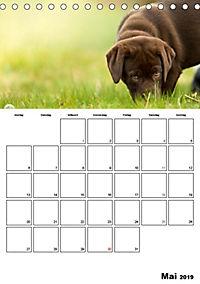 Labrador Welpe - Seelenhund (Tischkalender 2019 DIN A5 hoch) - Produktdetailbild 5