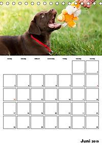 Labrador Welpe - Seelenhund (Tischkalender 2019 DIN A5 hoch) - Produktdetailbild 6