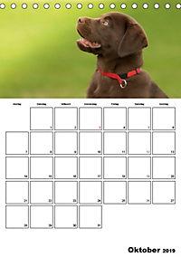 Labrador Welpe - Seelenhund (Tischkalender 2019 DIN A5 hoch) - Produktdetailbild 10