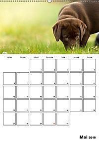 Labrador Welpe - Seelenhund (Wandkalender 2019 DIN A2 hoch) - Produktdetailbild 5