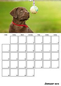 Labrador Welpe - Seelenhund (Wandkalender 2019 DIN A2 hoch) - Produktdetailbild 1
