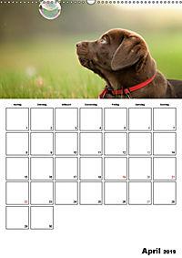Labrador Welpe - Seelenhund (Wandkalender 2019 DIN A2 hoch) - Produktdetailbild 4