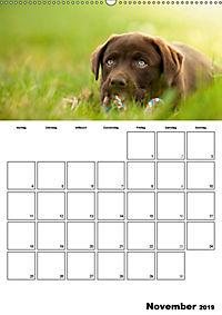 Labrador Welpe - Seelenhund (Wandkalender 2019 DIN A2 hoch) - Produktdetailbild 11
