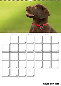 Labrador Welpe - Seelenhund (Wandkalender 2019 DIN A2 hoch) - Produktdetailbild 10