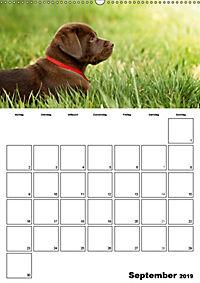 Labrador Welpe - Seelenhund (Wandkalender 2019 DIN A2 hoch) - Produktdetailbild 9