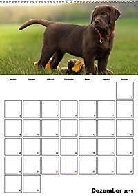 Labrador Welpe - Seelenhund (Wandkalender 2019 DIN A2 hoch) - Produktdetailbild 12