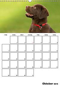 Labrador Welpe - Seelenhund (Wandkalender 2019 DIN A3 hoch) - Produktdetailbild 10