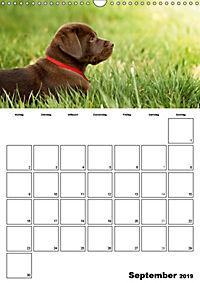 Labrador Welpe - Seelenhund (Wandkalender 2019 DIN A3 hoch) - Produktdetailbild 9