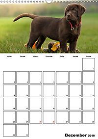Labrador Welpe - Seelenhund (Wandkalender 2019 DIN A3 hoch) - Produktdetailbild 12