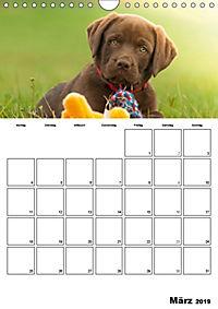 Labrador Welpe - Seelenhund (Wandkalender 2019 DIN A4 hoch) - Produktdetailbild 3
