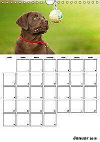 Labrador Welpe - Seelenhund (Wandkalender 2019 DIN A4 hoch) - Produktdetailbild 1