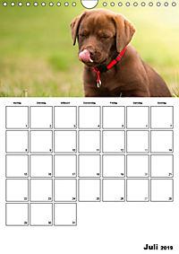 Labrador Welpe - Seelenhund (Wandkalender 2019 DIN A4 hoch) - Produktdetailbild 7