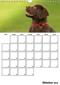 Labrador Welpe - Seelenhund (Wandkalender 2019 DIN A4 hoch) - Produktdetailbild 10