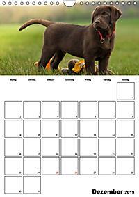 Labrador Welpe - Seelenhund (Wandkalender 2019 DIN A4 hoch) - Produktdetailbild 12