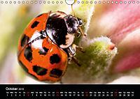 Ladybirds and Bees of the UK (Wall Calendar 2019 DIN A4 Landscape) - Produktdetailbild 10