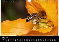 Ladybirds and Bees of the UK (Wall Calendar 2019 DIN A4 Landscape) - Produktdetailbild 5
