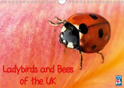 Ladybirds and Bees of the UK (Wall Calendar 2019 DIN A4 Landscape), Paul Iddon