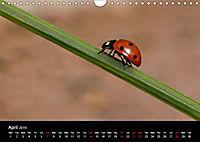 Ladybirds and Bees of the UK (Wall Calendar 2019 DIN A4 Landscape) - Produktdetailbild 4