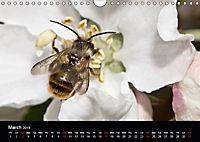 Ladybirds and Bees of the UK (Wall Calendar 2019 DIN A4 Landscape) - Produktdetailbild 3