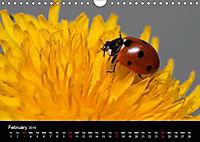 Ladybirds and Bees of the UK (Wall Calendar 2019 DIN A4 Landscape) - Produktdetailbild 2