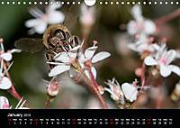 Ladybirds and Bees of the UK (Wall Calendar 2019 DIN A4 Landscape) - Produktdetailbild 1