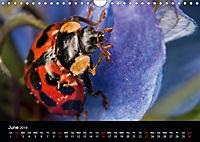 Ladybirds and Bees of the UK (Wall Calendar 2019 DIN A4 Landscape) - Produktdetailbild 6