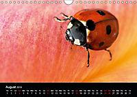 Ladybirds and Bees of the UK (Wall Calendar 2019 DIN A4 Landscape) - Produktdetailbild 8