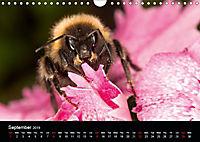 Ladybirds and Bees of the UK (Wall Calendar 2019 DIN A4 Landscape) - Produktdetailbild 9