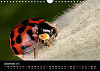 Ladybirds and Bees of the UK (Wall Calendar 2019 DIN A4 Landscape) - Produktdetailbild 12