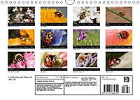 Ladybirds and Bees of the UK (Wall Calendar 2019 DIN A4 Landscape) - Produktdetailbild 13
