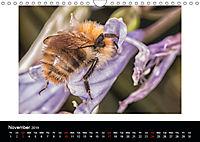Ladybirds and Bees of the UK (Wall Calendar 2019 DIN A4 Landscape) - Produktdetailbild 11