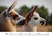 Lamas & Alpakas 2019 - Produktdetailbild 6