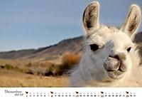 Lamas & Alpakas 2019 - Produktdetailbild 12