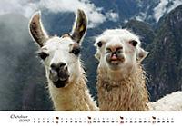 Lamas & Alpakas 2019 - Produktdetailbild 10