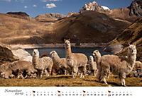 Lamas & Alpakas 2019 - Produktdetailbild 11