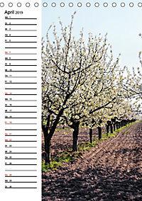 Land Brandenburg im Wechsel der Jahreszeiten (Tischkalender 2019 DIN A5 hoch) - Produktdetailbild 4