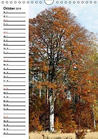 Land Brandenburg im Wechsel der Jahreszeiten (Wandkalender 2019 DIN A4 hoch) - Produktdetailbild 10