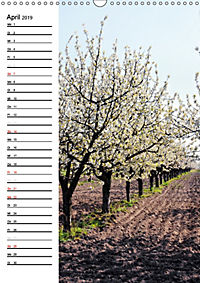 Land Brandenburg im Wechsel der Jahreszeiten (Wandkalender 2019 DIN A3 hoch) - Produktdetailbild 4