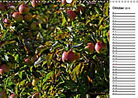 Landschaften des Kraichgaus (Wandkalender 2019 DIN A3 quer) - Produktdetailbild 10