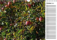 Landschaften des Kraichgaus (Wandkalender 2019 DIN A4 quer) - Produktdetailbild 10