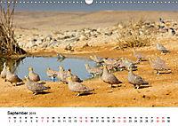 Landschaften und Vögel (Wandkalender 2019 DIN A3 quer) - Produktdetailbild 9