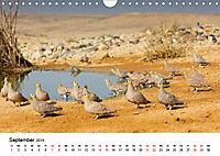 Landschaften und Vögel (Wandkalender 2019 DIN A4 quer) - Produktdetailbild 9