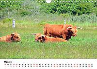 Langeoog - Sommer, Sonne, Strand (Wandkalender 2019 DIN A4 quer) - Produktdetailbild 5