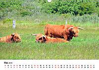 Langeoog - Sommer, Sonne, Strand (Wandkalender 2019 DIN A3 quer) - Produktdetailbild 5