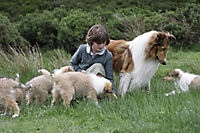 Lassie kehrt zurück - Produktdetailbild 9