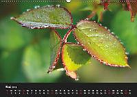 Laub und Blätter 2019 (Wandkalender 2019 DIN A2 quer) - Produktdetailbild 5
