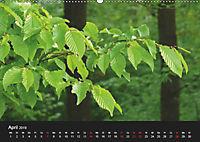Laub und Blätter 2019 (Wandkalender 2019 DIN A2 quer) - Produktdetailbild 4