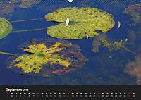 Laub und Blätter 2019 (Wandkalender 2019 DIN A2 quer) - Produktdetailbild 9